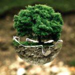 Der Baum des Lebens - Geführte Chakrameditation