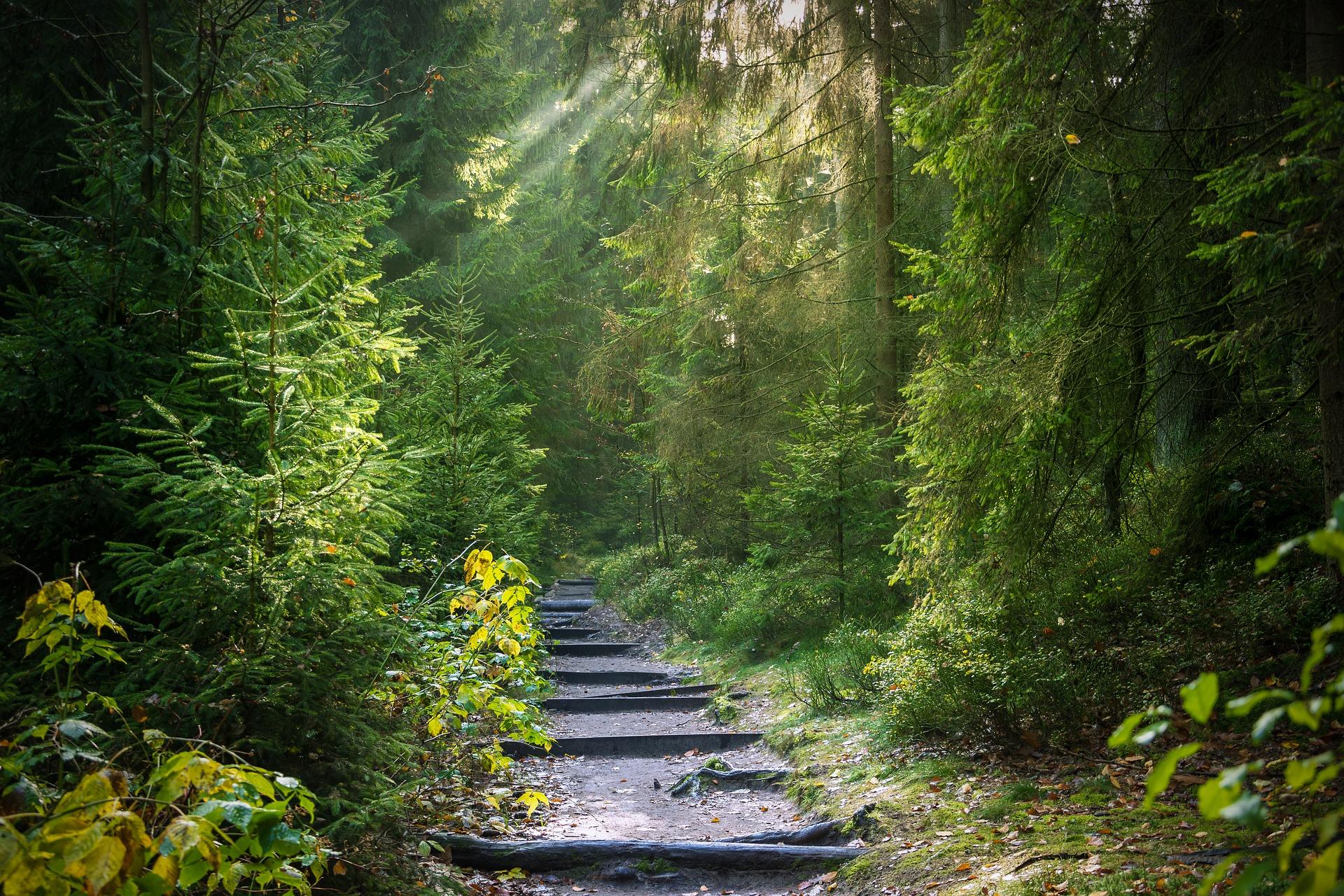 Tag im Wald Traumreise Text Skript Meditation