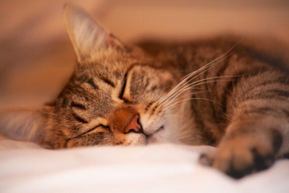 Geführte Einschlafmeditation für Kinder Fantasiekatze
